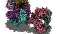 T cell receptor, molecular model