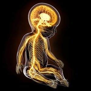 Baby's nervous system, artwork